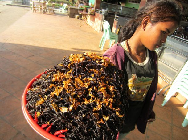 spiders as food in Cambodia