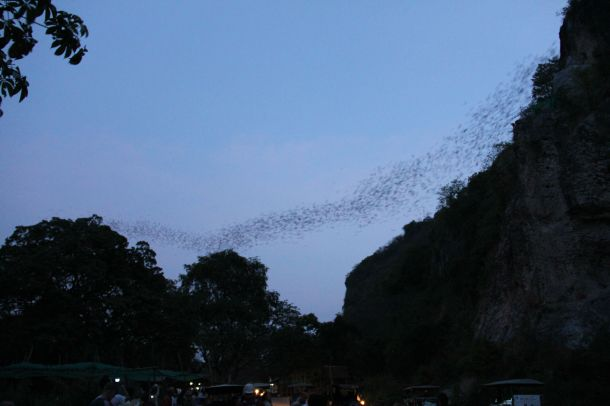 Bats at Phnom Sampeau
