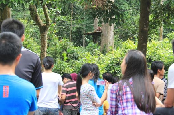 Sepilok orangutan rehabilitation centre borneo malaysia