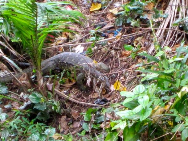 Hotel London Sandakan Malaysia lizard