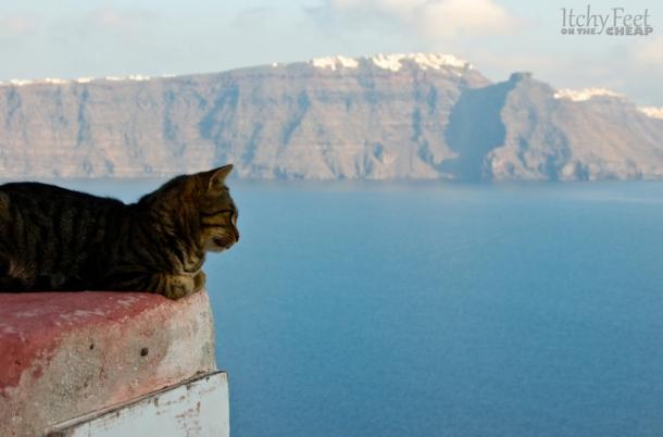 greek islands cat