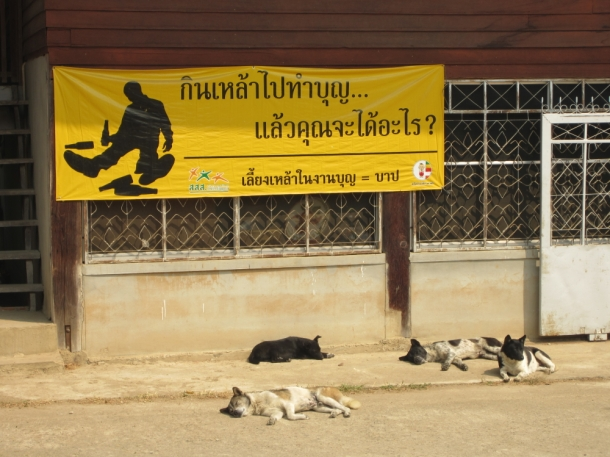 Pai, Thailand sleeping dogs funny sign