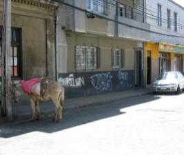 Donkey parking.