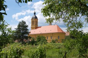 Modra church vineyards Slovakia